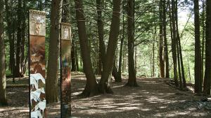 La terre a une mémoire: le Happening dans la forêt Drummond